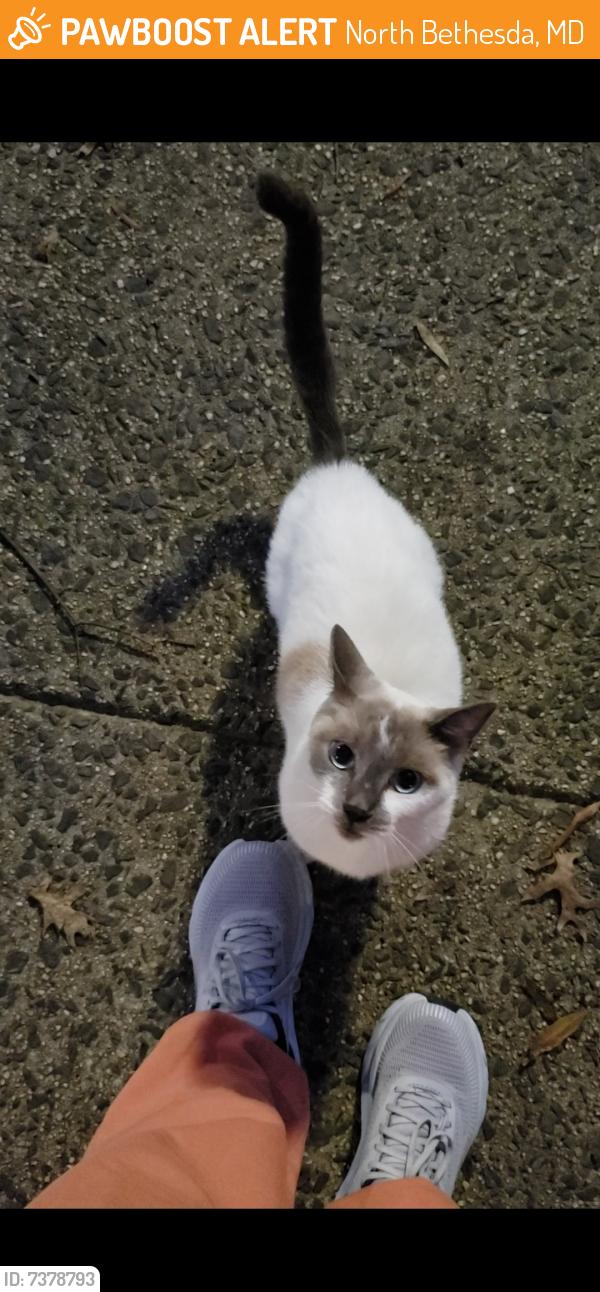 Found/Stray Unknown Cat last seen Luxemburg Street, North Bethesda MD, North Bethesda, MD 20852