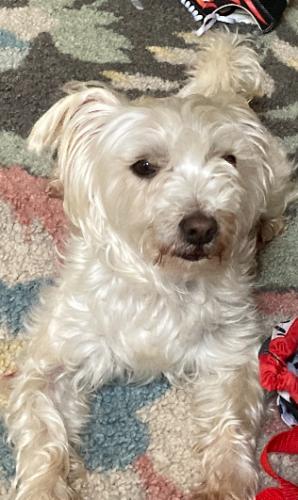 Lost Male Dog last seen Evans street , Manassas Park, VA 20111
