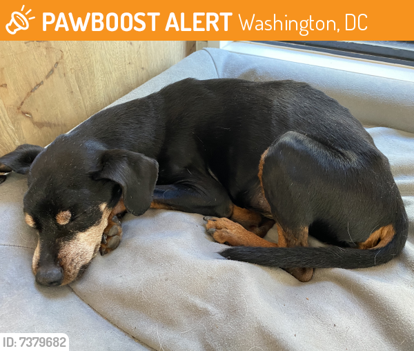 Found/Stray Male Dog last seen Sibley hosp , Washington, DC 20016