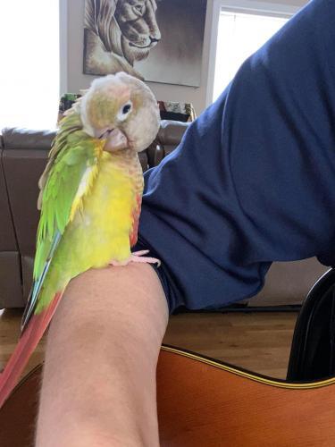 Lost Female Bird last seen Four mile run & George mason drive , Arlington, VA 22204