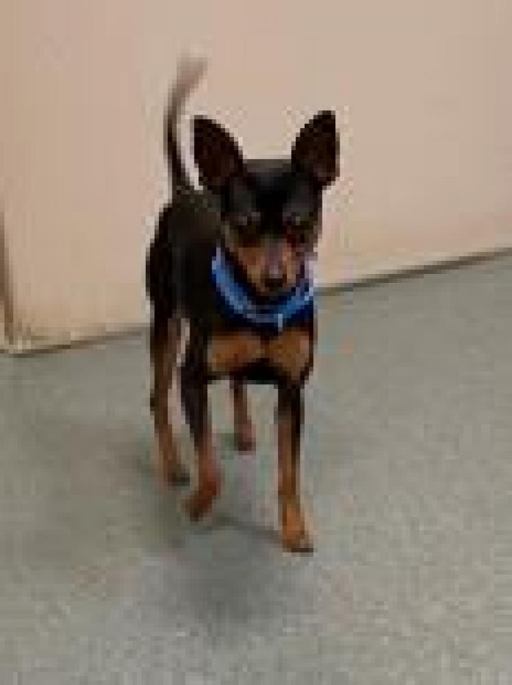 Shelter Stray Male Dog last seen Lorton, VA 22079, Fairfax, VA 22032