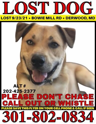 Lost Male Dog last seen Music Grove Court, Montgomery County, MD 20855