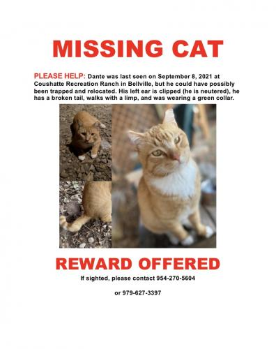 Lost Male Cat last seen Coushatte Recreation Ranch, Austin County, TX 77418