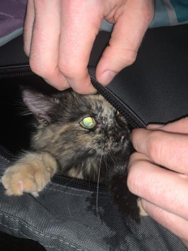 Found/Stray Unknown Cat last seen Near W Baseline Rd, Mesa, AZ 85210, Mesa, AZ 85210