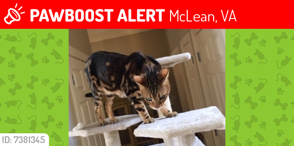 Lost Male Cat last seen Franklin Ave and Virginia Ave, McLean, VA 22213
