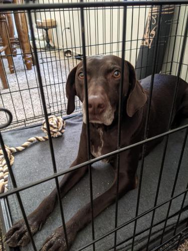 Found/Stray Female Dog last seen Val Vista Dr & University Dr, Mesa, AZ 85213