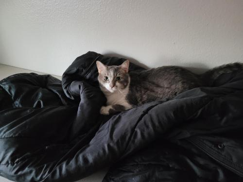 Lost Female Cat last seen Brown and McKemy, Tempe, AZ 85281