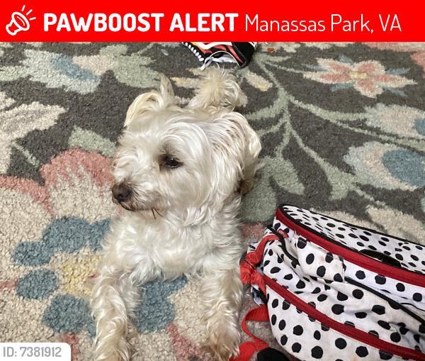 Lost Male Dog last seen Evans st manassas park , Manassas Park, VA 20111