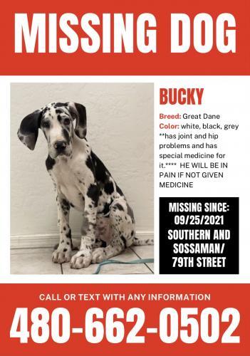 Lost Male Dog last seen Southern and Sossaman , Mesa, AZ 85209