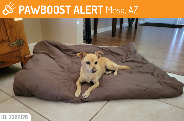 Surrendered Male Dog last seen Guadalupe and Farnsworth , Mesa, AZ 85209