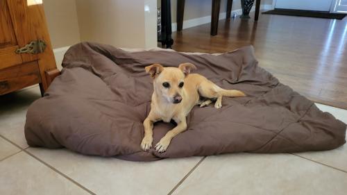 Found/Stray Male Dog last seen Guadalupe and Farnsworth , Mesa, AZ 85209