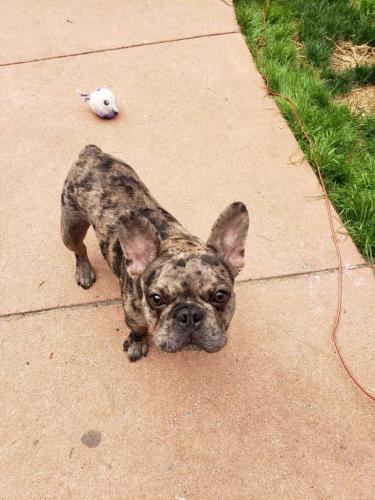 Lost Male Dog last seen Glennallan Avenue, Silver Spring, MD 20902