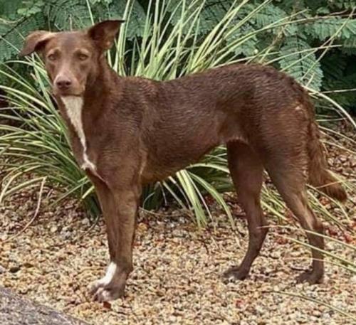 Found/Stray Female Dog last seen E Balsam Ave, Mesa , Mesa, AZ 85208