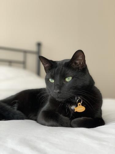 Lost Male Cat last seen Near Lavender Plz (Mountain Village subdivision in Ballenger Creek) , Frederick, MD 21703