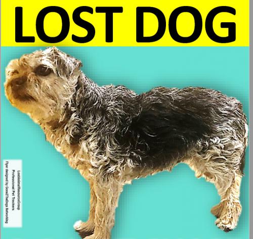 Lost Female Dog last seen Viewtree Dr., Warrenton, VA 20186