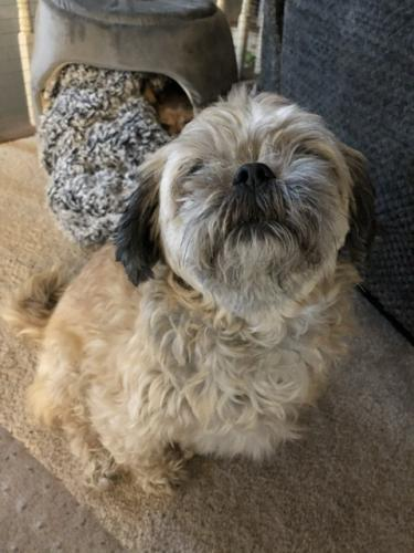 Lost Female Dog last seen West Patrick St  &  Willowdale Rd, Frederick, MD 21702