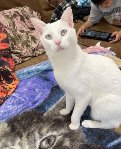 Lost Female Cat last seen Near caballeros cyn nuevo ca 92567, Nuevo, CA 92567