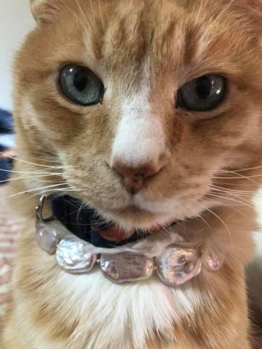 Lost Male Cat last seen Baish Drive, Ebaugh Drive, Hope Parkway, Leesburg, VA 20175