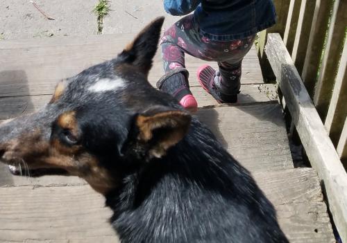 Lost Female Dog last seen School st/ Owens Dr, Ridgeville, SC 29472