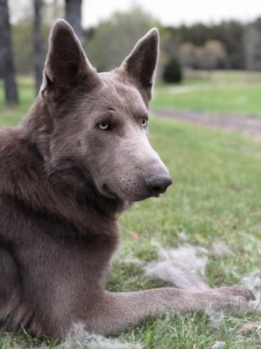 Lost Male Dog last seen Camden, SC, Camden, SC 29020