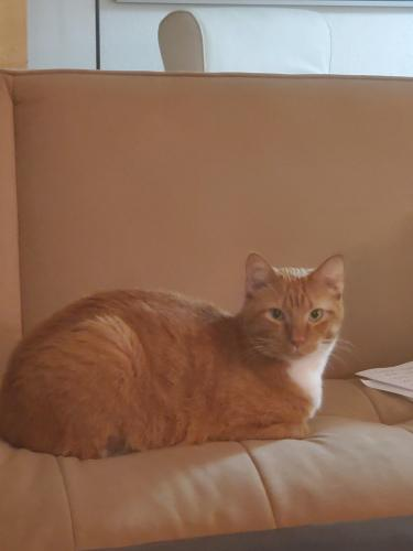 Lost Male Cat last seen McDowell at Scottsdale Belle Rive Apts, Scottsdale, AZ 85257