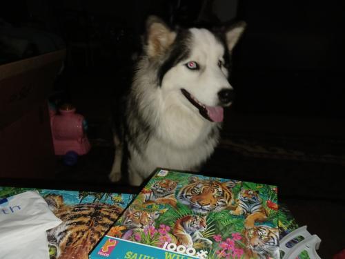 Lost Male Dog last seen Hey 344 and prairie moon, Edgewood, NM 87015