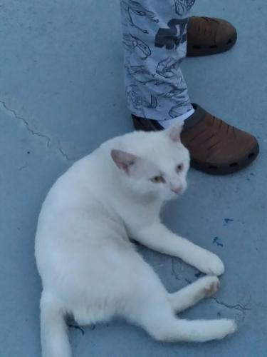 Found/Stray Male Cat last seen Pridgdon road and Pinner place, Myrtle Beach, SC 29577