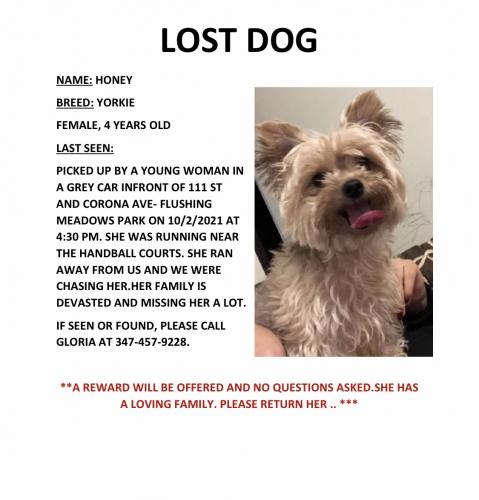 Lost Female Dog last seen 111st and corona avenue ( entrance of flushing meadows park), Queens, NY 11368