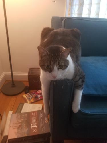 Lost Male Cat last seen Near spencer rd silver spring md 20910, Silver Spring, MD 20910