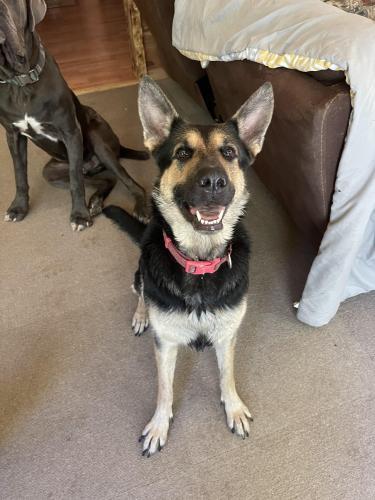 Lost Female Dog last seen Leesburg Road and Old Leesburg Road , Eastover, SC 29044