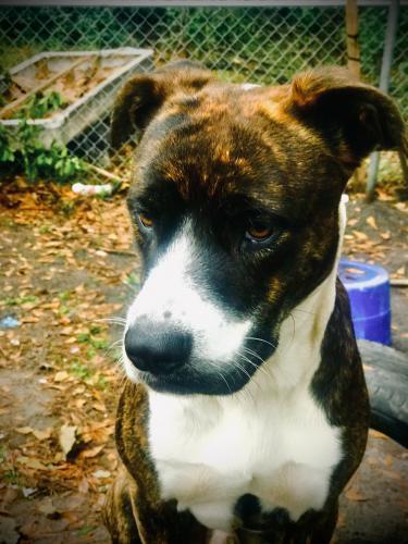 Lost Male Dog last seen Carolina ave Sumter sc, Sumter, SC 29150