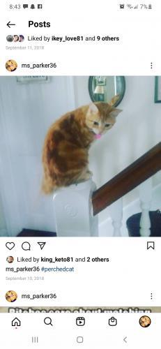 Lost Male Cat last seen East b St brunswick md, Brunswick, MD 21716