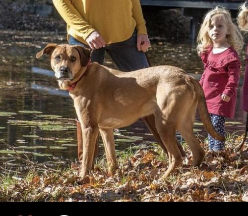 Lost Male Dog last seen Near Clarksburg Road , Damascus, MD 20871