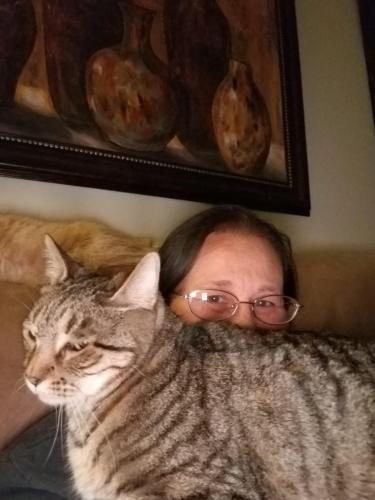 Lost Male Cat last seen THE OASIS AT MAGIC RANCH/High Dunes Drive , Florence, AZ 85132