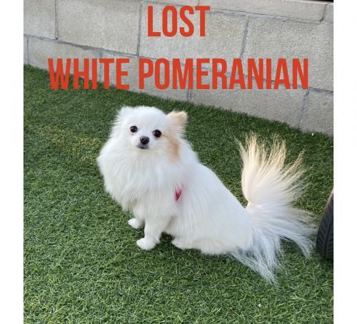 Lost Female Dog last seen E Pershing Ave, Scottsdale, AZ 85260