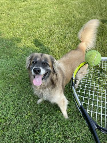 Lost Male Dog last seen Allder echool rd, Purcellville, VA 20132