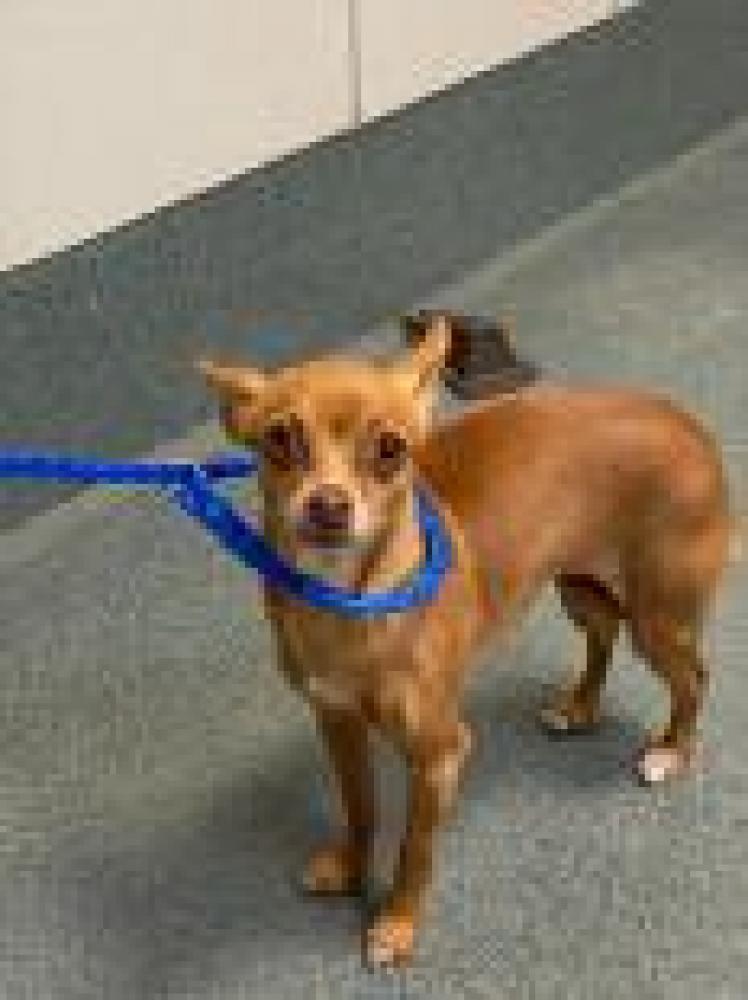 Shelter Stray Female Dog last seen Springfield, VA 22150, Fairfax, VA 22032