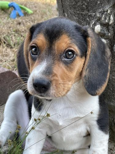 Lost Female Dog last seen Peachland, NC, Anson County, NC 28133