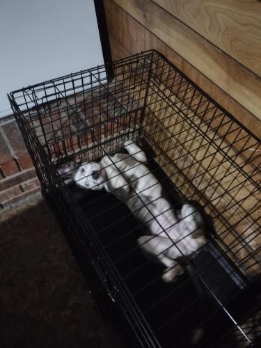 Lost Female Dog last seen Rosebud st, Columbia, SC 29203