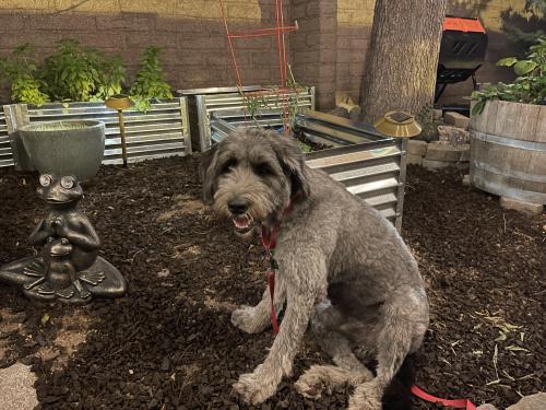 Lost Male Dog last seen Jefferson Park (North University) Neighborhood, Tucson, AZ 85719