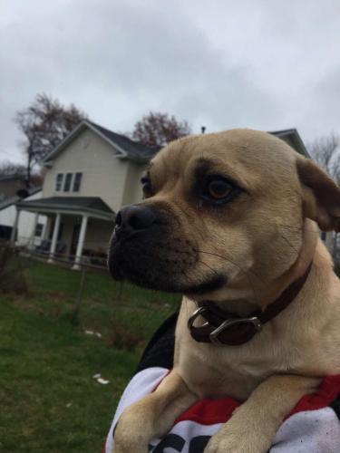 Lost Male Dog last seen Forrest street, Manassas Park, VA 20111