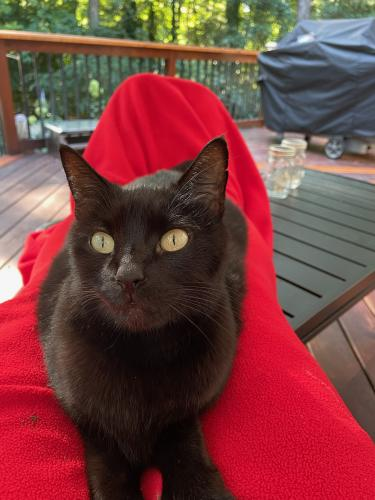 Lost Female Cat last seen Lochmere in Cary, Cary, NC 27518