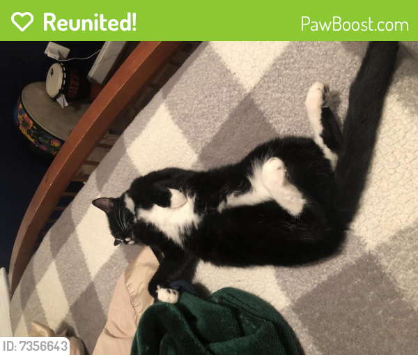 Reunited Male Cat last seen Oakcrest Drive and Kenwood Avenue, Alexandria, VA 22302