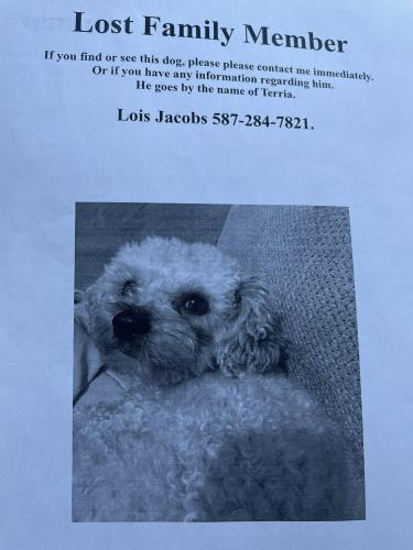 Lost Male Dog last seen Town Centre , Calgary, AB