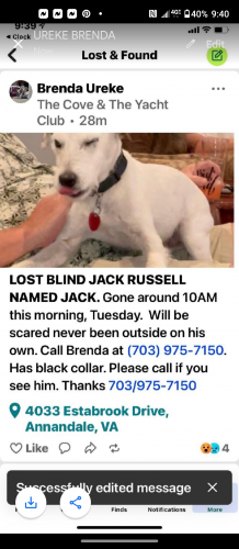 Lost Male Dog last seen Route 236, Annandale, VA 22003