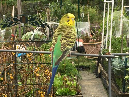 Found/Stray Female Bird last seen Lewinsville Park, McLean, VA 22101