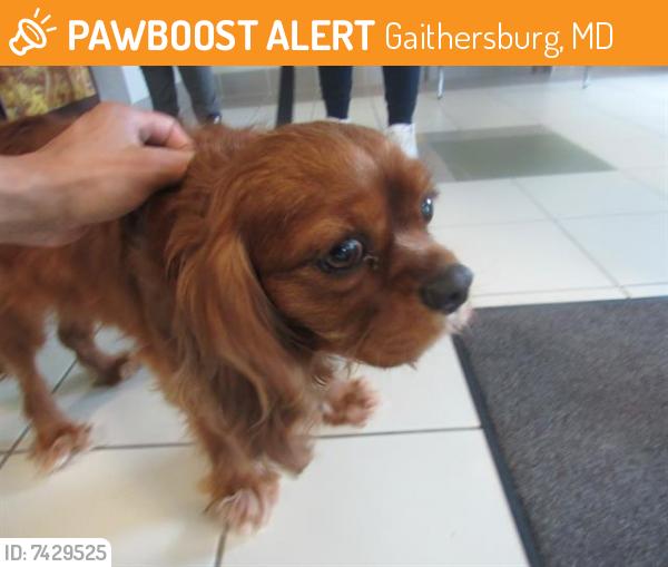 Found/Stray Male Dog last seen Fields Rd, Gaithersburg, MD 20878