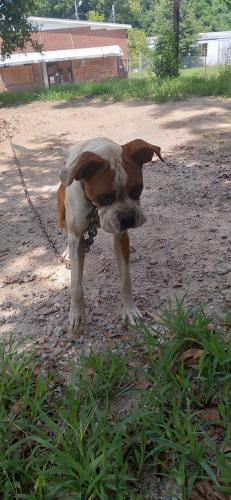 Lost Male Dog last seen near gaystreet basketball courts , Lancaster, SC 29720