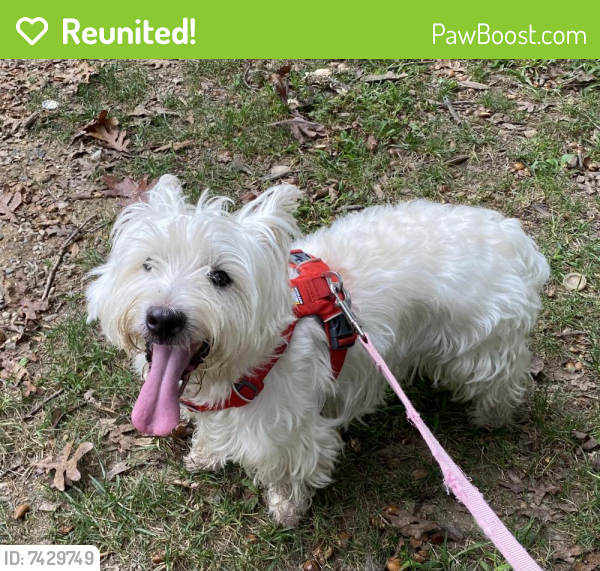 Reunited Male Dog last seen Capitol View Park, Silver Spring, MD 20902
