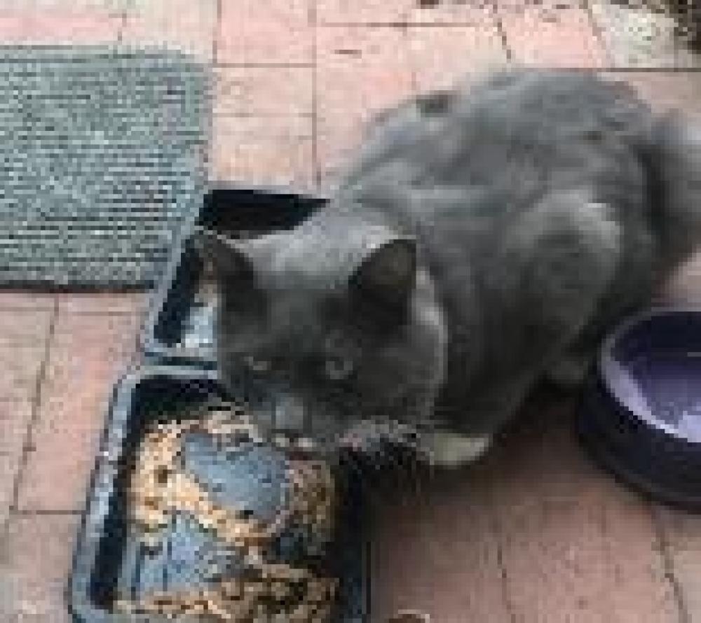 Shelter Stray Unknown Cat last seen Falls Church, VA 22044, Fairfax, VA 22032